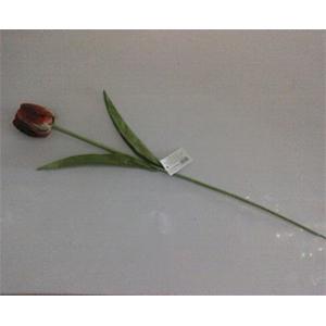 Vara de tulipán  roja