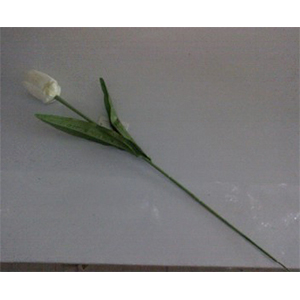 Vara de tulipán  blanco