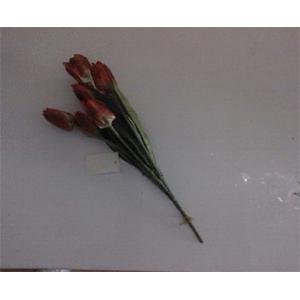 Ramito de tulipán rojo jaspeado