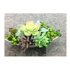Maceta de cerámica blanca con cactus y plantas verdes