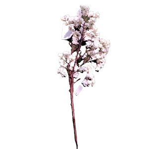 Vara de flor de durazno blanca