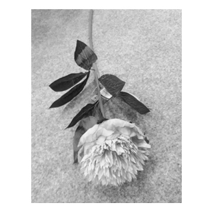 Vara con clavel blanca con hojas