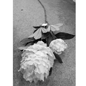 Flor blanca con hojas