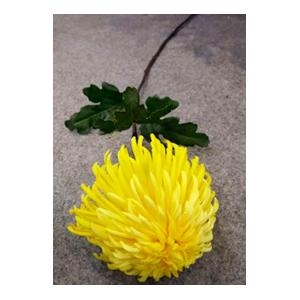 Vara con crisantemo amarilla con hojas