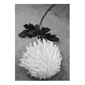 Vara con crisantemo blanca con hojas