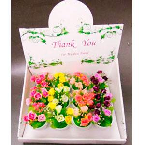 Maceta con rosas de diferentes colores de 12.5cm