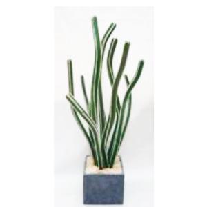 Cactus en maceta cuadrada de 107cm