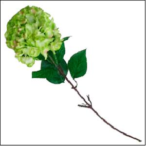 Vara de flor de  Hortensia color verde