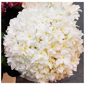 Vara de flor de Hortencia blanca