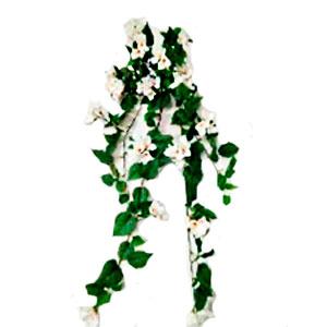 Ramo de flor de buganbilia blanca