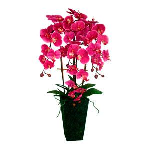 Maceta de Orquídeas moradas con raíces y hojas