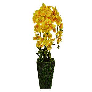 Maceta de Orquídeas amarillas con raíces y hojas