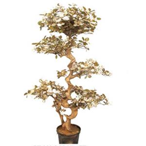 Bonsái ficus de hojas doradas en maceta de 167cm
