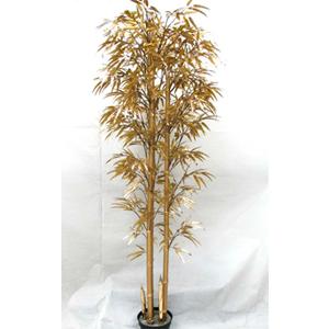 Bambú dorado en maceta de 245cm