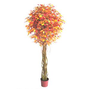 Árbol Ficus de hojas otoñales en maceta de 229cm