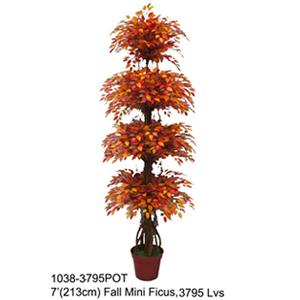 Árbol Ficus de hojas otoñales en maceta de 210cm