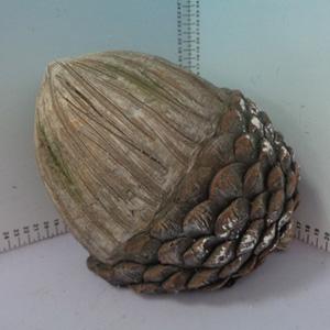 Piña de 23x21x20cm