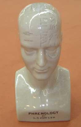 Busto de frenología de cerámica blanca 42.5cm