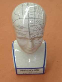 Busto de frenología de cerámica blanca 25cm