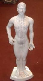 Cuerpo humano con puntos de acupuntura de cerámica blanca de 50cm