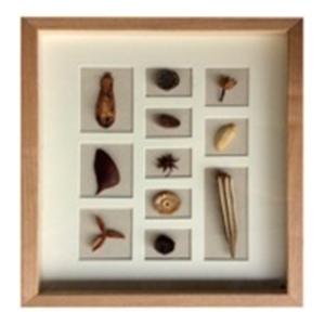 Cuadro con diferentes tamaños de semillas de 40x50x4cm