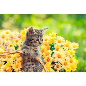 Cuadro estampado gato con flores amarillas con luz led de 60x40x1.8cm