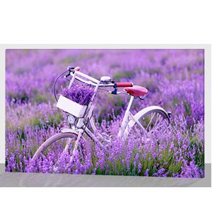 Cuadro estampado de bicicleta en campo de lavanda y luz led de 60x40x1.8cm