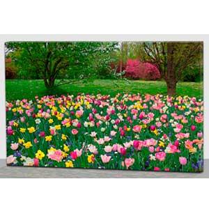 Cuadro con estampado de tulipanes de colore con luz led de 60x40x1.8cm