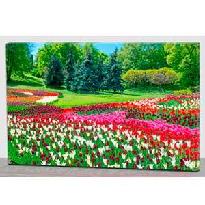 Cuadro con estampado de campo de flores con luz led de 60x40x1.8cm