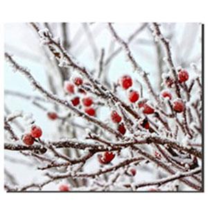 Cuadro diseño Vara de cerezas nevada de 30x40x1.5cm