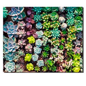 Cuadro diseño Plantas verdes de 30x40x1.5cm