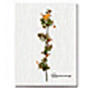 Cuadro con diseño de flores con hojas de 30x40x1.5cm