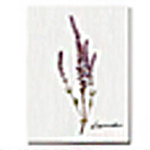 Cuadro con diseño Flores Lavanda de 30x40x1.5cm