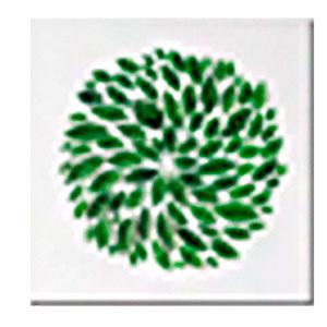 Cuadro diseño Hojas verde en forma circular de 50x50x1.8cm