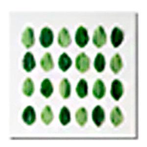 Cuadro con diferentes tipos de Hojas verdes de 50x50x1.8cm