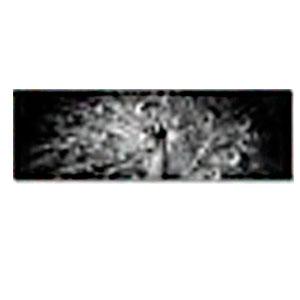 Cuadro diseño Pavorreal a blanco y negro de 45x140x1.8cm