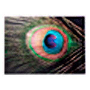 Cuadro diseño Pluma de Pavorreal de 50x70x1.8cm