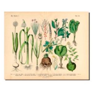 Cuadro diseño Plantas verdes de 40x50x1.8cm