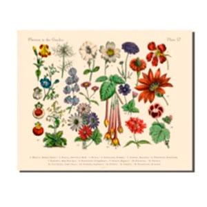 Cuadro diseño Plantas y Flores de 40x50x1.8cm