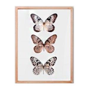 Cuadro c/marco de madera y pantalla de acrilico diseño Mariposas de colores de 30x40x2cm