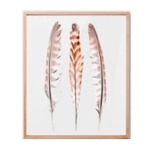 Cuadro c/marco de madera y pantalla de acrilico diseño Plumas de Aves de 40x48x2cm