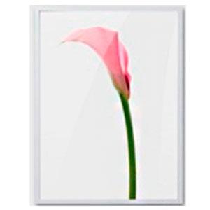 Cuadro c/marco de madera y pantalla de acrilico diseño Vara de Anturio rosa de 30x40x2.5cm
