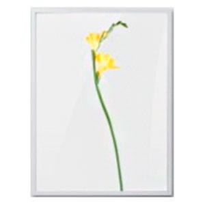 Cuadro c/marco de madera y pantalla de flores Campanita amarillas de 30x40x2.5cm