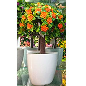 Maceta de melamina blanca con arbol de hojas verdes con flores naranjas
