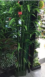 Maceta con Bambu de 2m