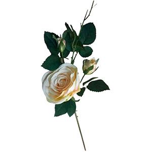 Vara de Rosas c/boton beige