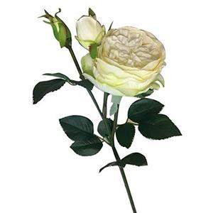 Vara de Rosas c/boton blancas