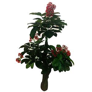 Planta con hojas de mora  de 150cm