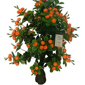 Arbol de mandarina de 90cm