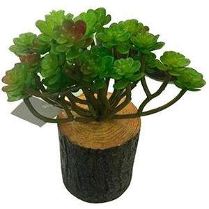 Maceta diseño tronco con plantas verdes